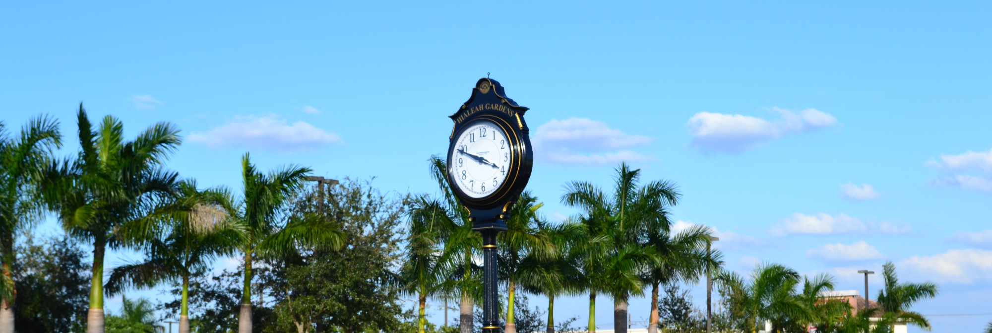 Clock and Palm Trees 2